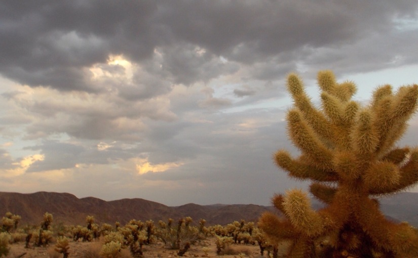 A desert story about the teddy bear cholla (warning: it's not cute at all…)