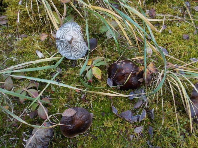 Mushrooms everywhere...