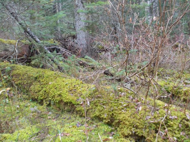 Mossy greenery