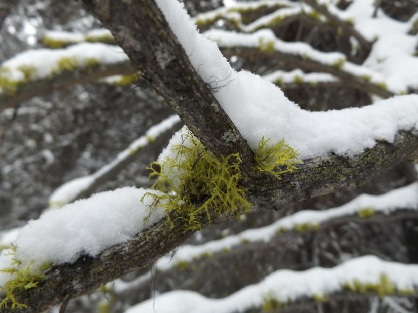 Snow on barebones