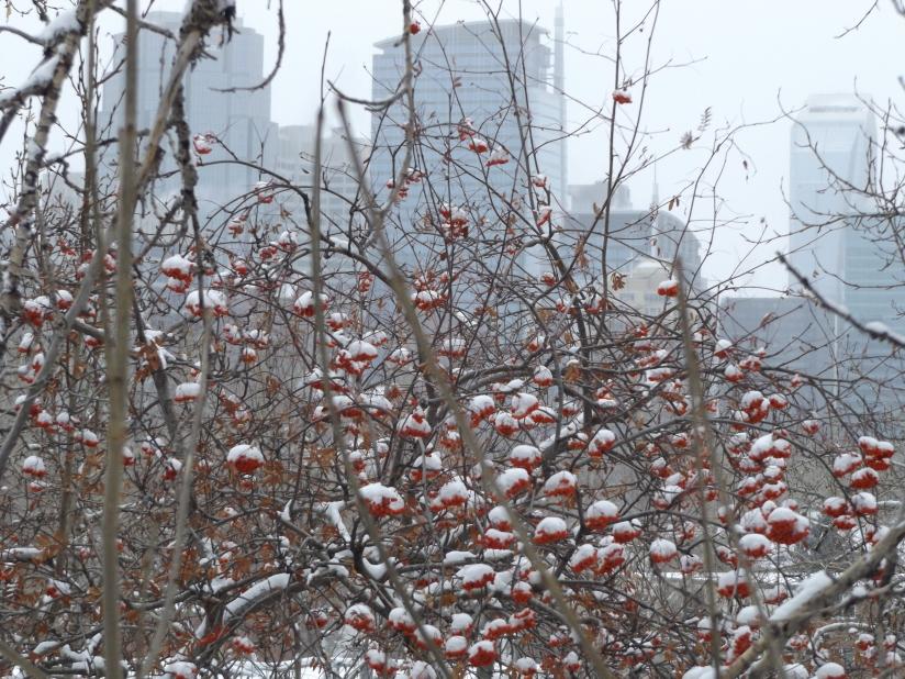 Snow city!