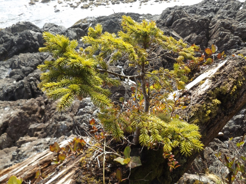 The tiny tree (and an Earth Daystory)