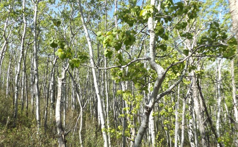 Woodland walks and Sunnysidestrolls