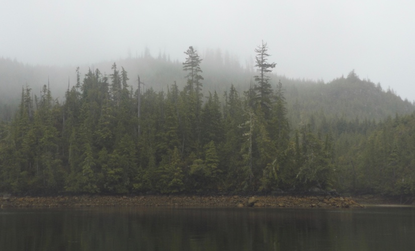 Mists and drizzle (and a bear or two)
