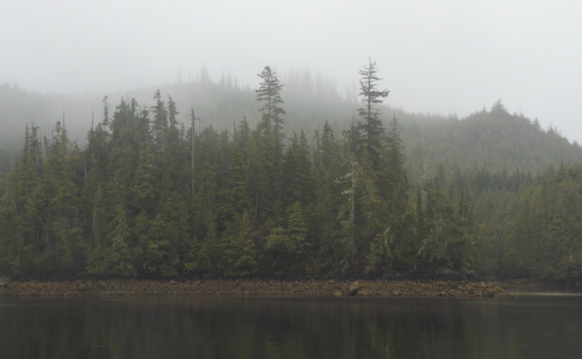 Mists and drizzle (and a bear ortwo)