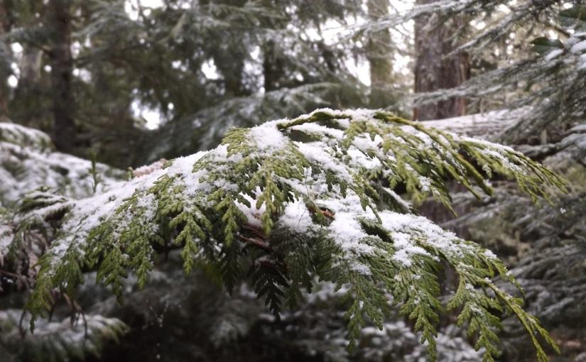 Falling on cedar