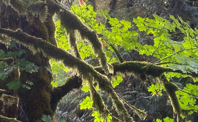 Green Creek Restoration